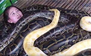 Un zoo philippin propose des massages... aux serpents