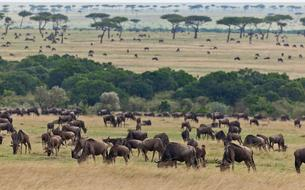 Les 10 sites et attractions incontournables au Kenya