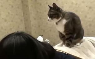 La nouvelle tendance au Japon: un massage effectué par un chat