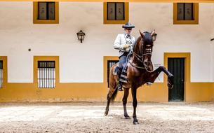 En Andalousie, le cheval roi