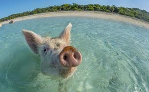 Où nager avec des animaux étonnants (en liberté) ?