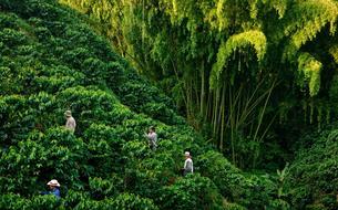 En Colombie, à la découverte du triangle du café