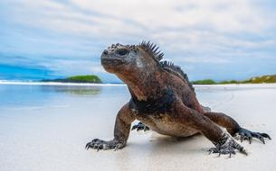 Galápagos : sur les traces de Charles Darwin