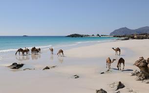 Au sultanat d'Oman, le Dhofar encensé