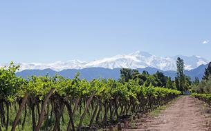 Chili, Argentine: à la découverte des vins du bout du monde
