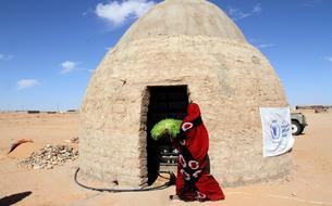 Avec l'hydroponie, cultiver dans le Sahara, c'est possible!