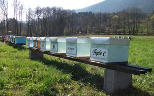 Pour sauver les abeilles, une société propose de parrainer des ruches