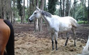 Une cavalière se bat pour sauver des chevaux de la boucherie