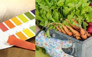 Jardin: le bon pH, gage de futures bonnes récoltes