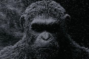 La fourrure numérique de César compte près d'un million de poils.