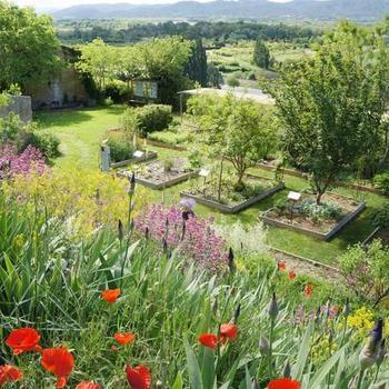 Le jardin de plantes tinctoriales de Lauris.