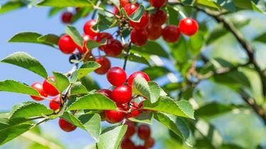 Heure d'été: dix plantes et un fruit pour mieux dormir