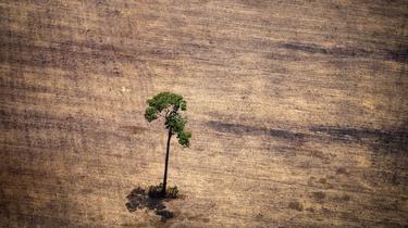 Déforestation : comment l'homme détruit la planète