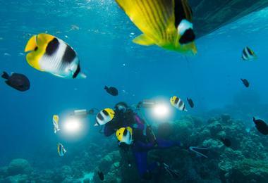 Plongée à Bora-Bora