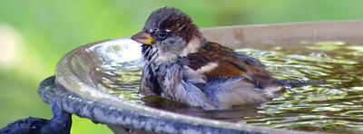 Prévoyez un récipient d'eau fraîche pour les oiseaux.