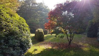 La magie de l'arboretum de la Sédelle, près de Crozant, dans la Creuse.