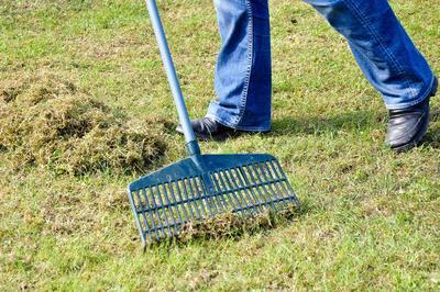Plus besoin de râteau: l'herbe finement broyée est recyclée par la mico-faune du sol.