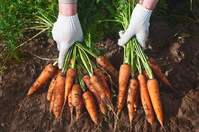 Plantez Des Fleurs Et Des Legumes Pour L Automne