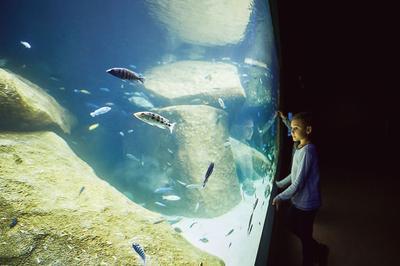 Le bâtiment cylindrique de l'aquarium-vivarium Aquatis abrite une communauté internationale de 10000 poissons et d'une centaine de reptiles et amphibiens.