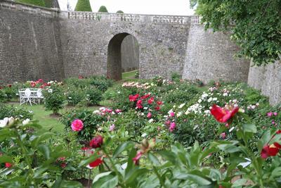 Chaque mois de mai, les pivoines du château de Sourches illuminent les murailles des douves.
