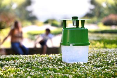 Piège à phéromone Buxatrap. Crédit photo: Koppert