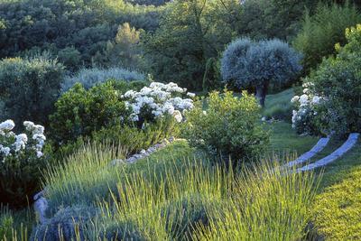 Buissons de roses blanches, de perovskias, de polygonums et de myrtes de Tarente: un tableau impressionniste qui n'aurait pas manqué d'inspirer Monet. Photo: Philippe Perdereau.