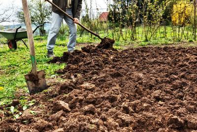 En sol argileux, procédez à un labour dressé à l'automne.