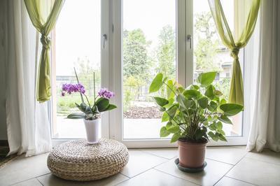 En hiver, les plantes souffrent du manque de lumière. Installez-les dans des pièces éclairées.