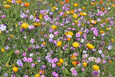 Les mélanges fleuris permettent d'attirer les abeilles et de confectionner de jolis bouquets.