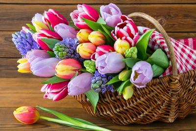 Tulipes et jacinthes.
