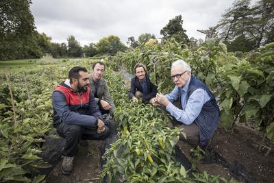 De gauche à droite: Mehdi Redjil (jardinier du potager de la Reine), Denis Courtiade (chef du Plaza Athénée), Gilles de Maistre (réalisateur) et Alain Ducasse devant des plants de piment.