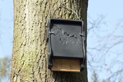Un abri à chauve-souris installé sur le tronc d'un arbre.