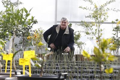 Bernard Riera dans la serre où il multiplie ses plants d'agrumes, à Venelles près d'Aix-en-Provence.