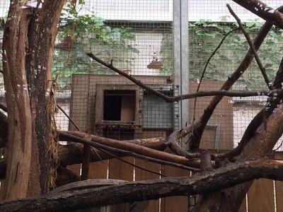 Petit boxe dans lequel se trouvaient les singes. Crédits photo: ZooParc Beauval.