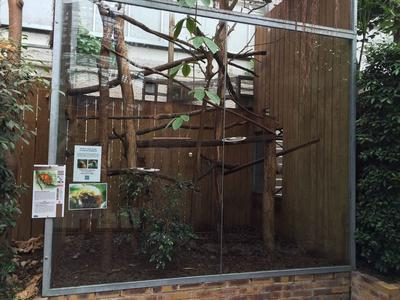 La cage dans laquelle les petits singes évoluaient au Zoo de Beauval. Crédits photo: ZooParc Beauval.