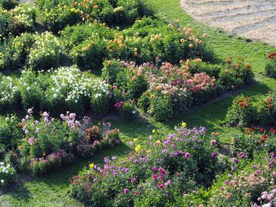 Au château de la Bourdaisière (Indre-et-Loire), le <i>Dahliacolor,</i> imaginé par le paysagiste Louis Benech, rassemble une collection de 253 variétés de dahlias. DR <i/>