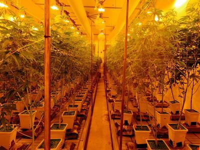 Cette plantation aux installations high-tech a été inaugurée fin septembre, à la lisière du Desert Hot Springs dans la vallée de Coachella.