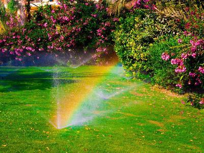 Assurez-vous que vos plantes ne manqueront pas d'eau