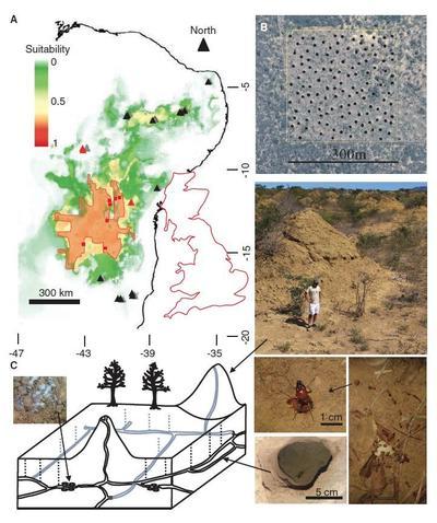Localisation et étendue du tentaculaire réseau de termitières brésilien.