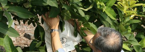 Où trouver des sacs pour ensacher pommes et poires ?
