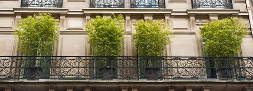 Quels types de bambou planter sur un balcon?