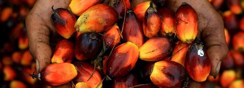 De quoi l'huile de palme est-elle coupable ?
