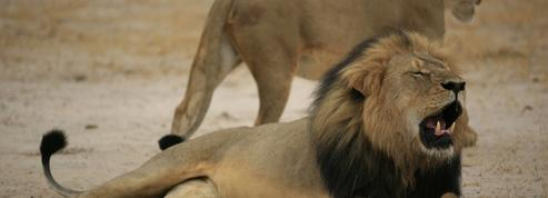 Le monde entier a une dent contre le tueur du lion