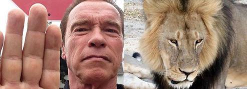 Cecil le lion : Schwarzenegger attaque le dentiste américain