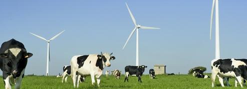 Ces éoliennes qui troublent le lait des vaches