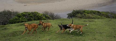 L'Asie, berceau de la domestication du chien