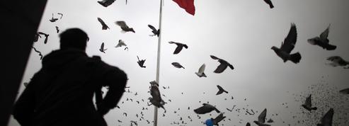 Quand l'air est pollué, les pigeons accélèrent