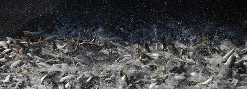 L'étude qui dévoile les ravages de la surpêche industrielle