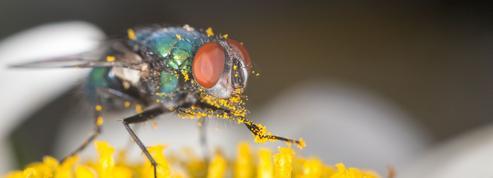 Faut-il laisser les mouches aller sur les fleurs ?