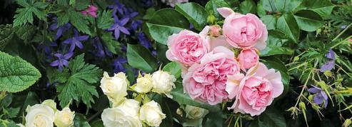 Trouvez de belles compagnes pour vos roses